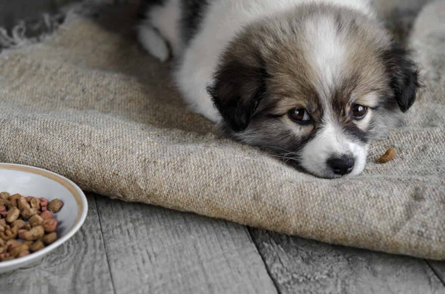 Puppy lying on sack next to kibble plate