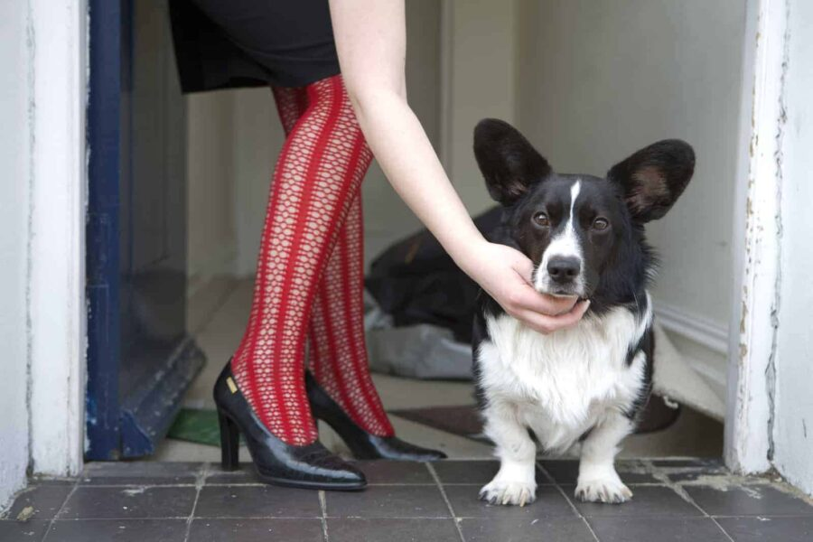 Woman in red stockings with black and white corgi