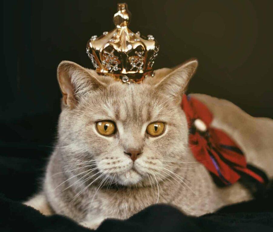 Beige cat with golden crown