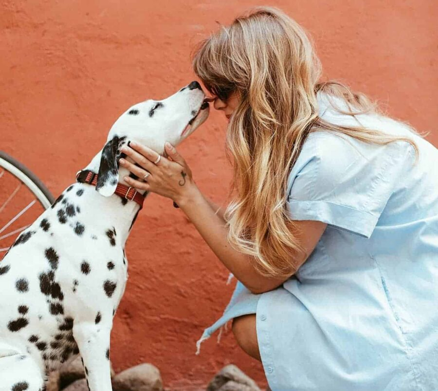 Dalmatian licking face of blonde crouching woman