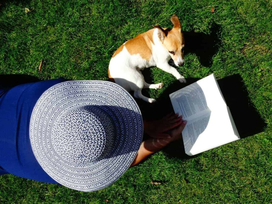 Jack Russell lounging with owner reading a book