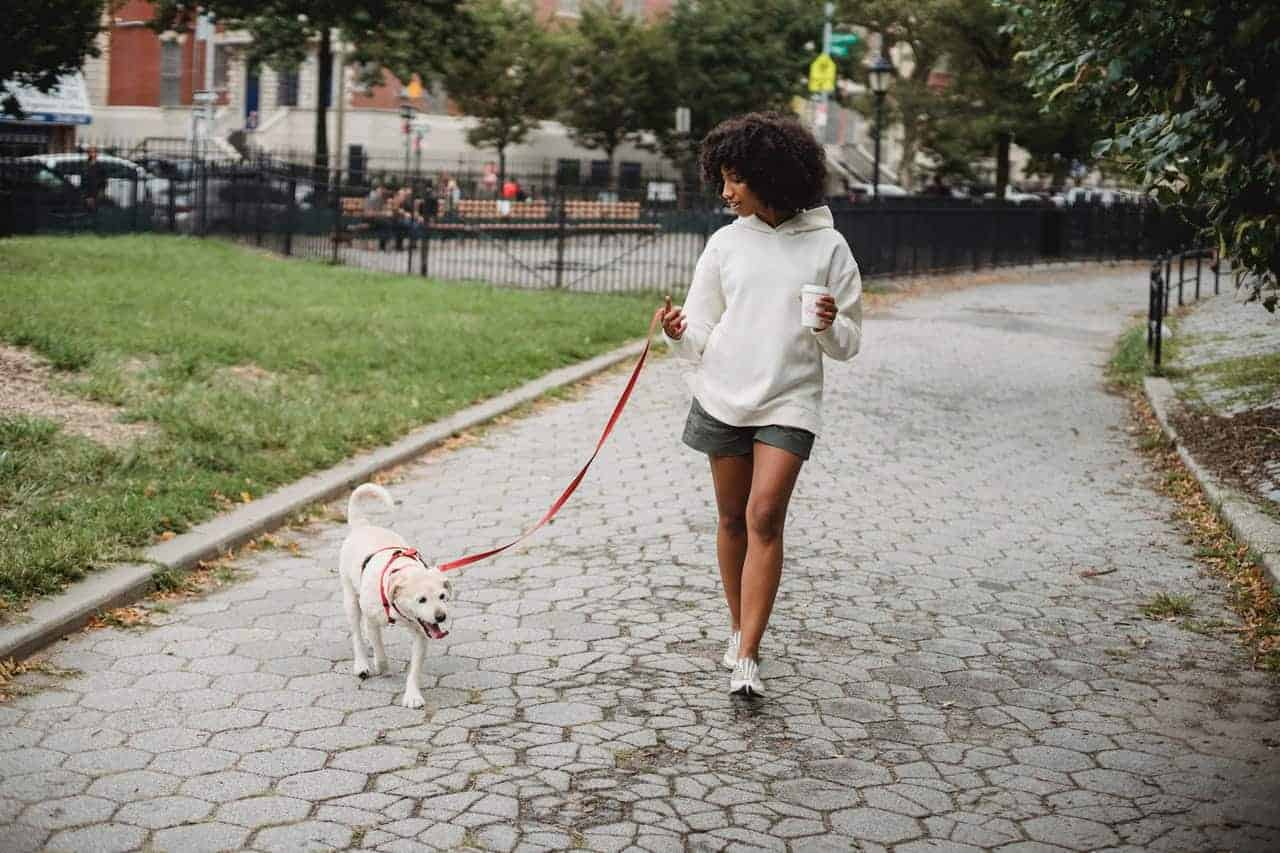 Is 80 degrees too hot to walk a dog ?
