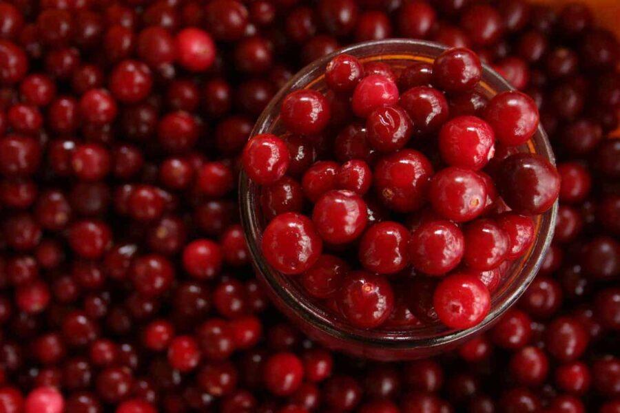 Close up of cranberries