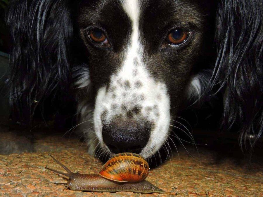 Dog curious looking at snail
