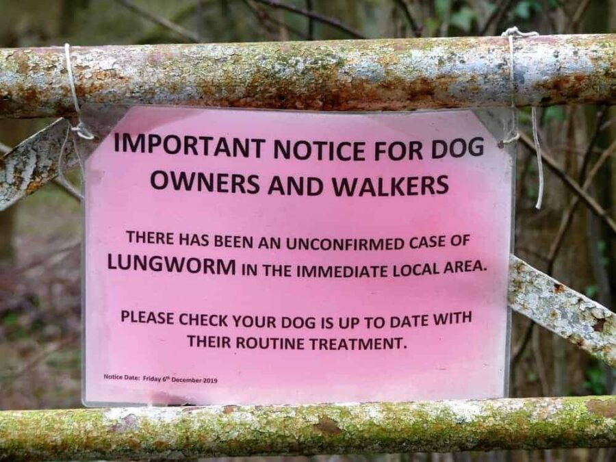 Dog owners lungworm warning sign