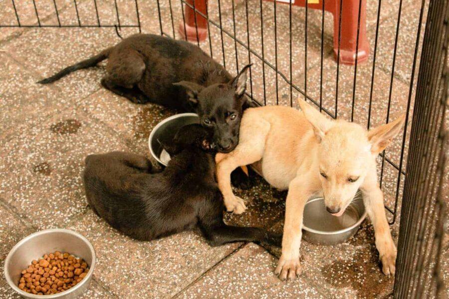 Puppies on tile ignoring food