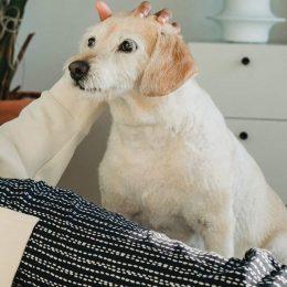 My dog won't leave my side