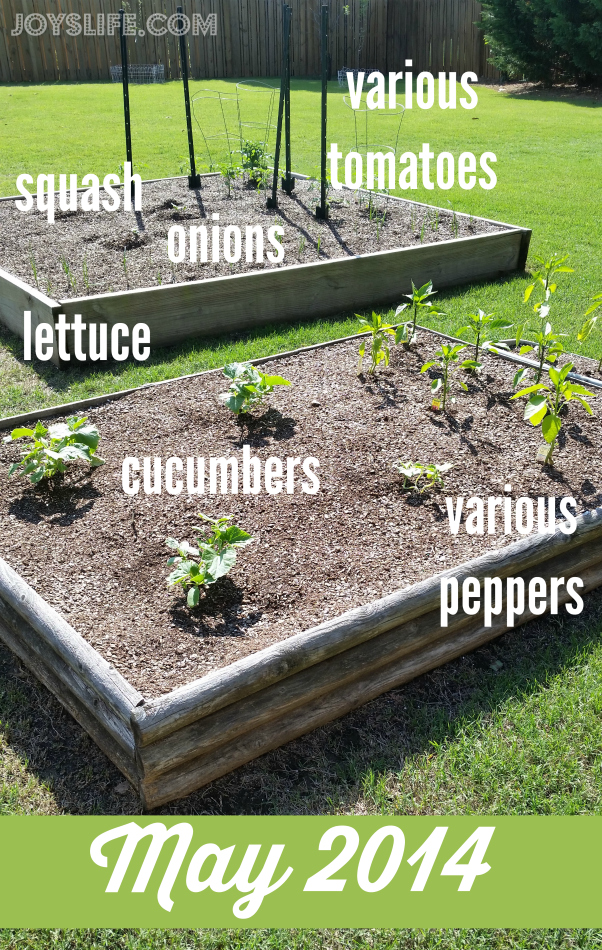Rosemary & Thyme Butter Recipe from Our Herb Garden Plus a Garden Update #OrganicChoice #HerbButter #Recipe #Garden #ContainerGardening