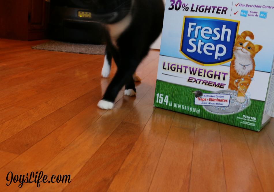 My Cat Domino's Personal Business Part 2  #FreshStepCats review #ad #cat #pets