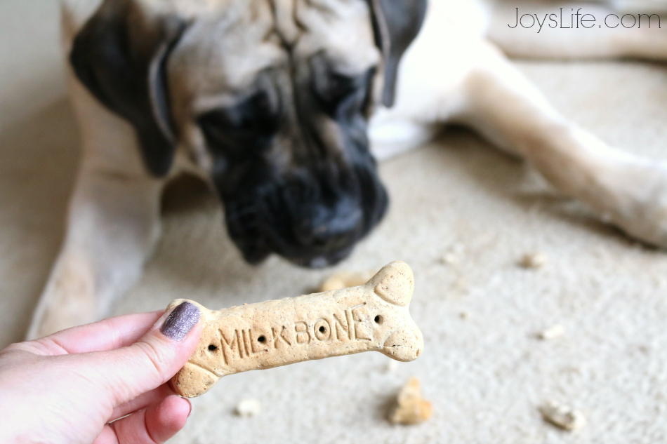 Easy Vinyl Dog Bowl DIY with Milk-Bone & Pup-Peroni  #TreatThePups #Ad #SilhouetteCameo #DIY #EnglishMastiff #DogBowl
