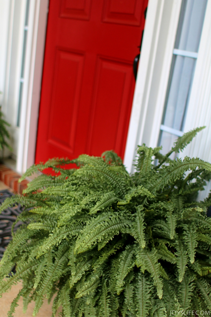 red door green fern