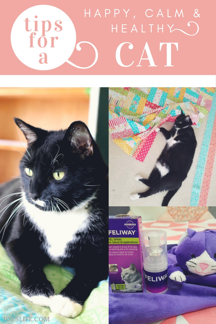 Quick Tips for a Happy, Calm & Healthy Cat
