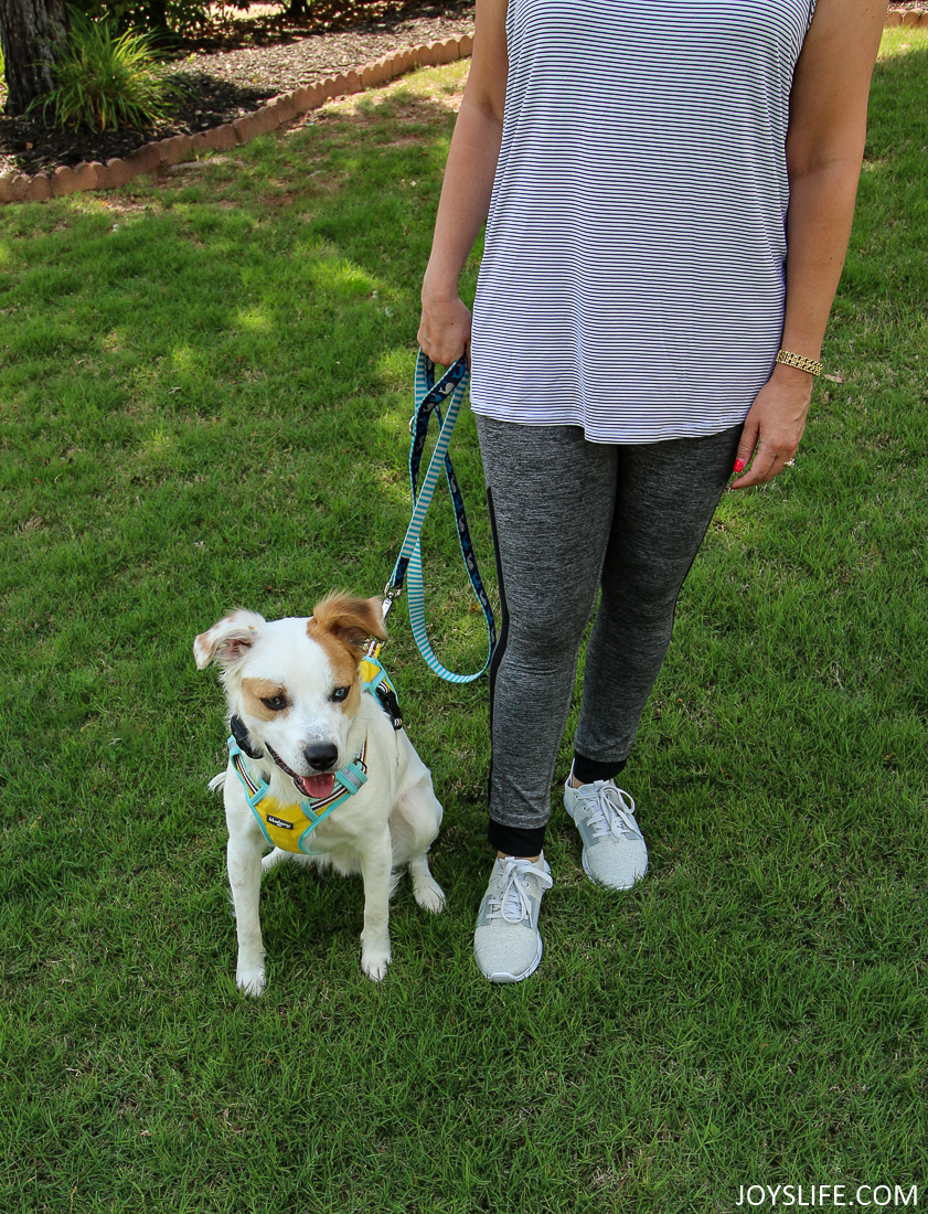 Reebok Trilux and brittany spaniel