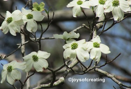 Dogwood blooms blowing in the wind