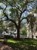 CHS courtyard tree & bench