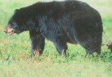 곰 표지판