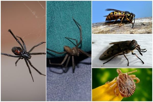 캐나다에서 여름 야외 활동 시 주의해야할 곤충은?