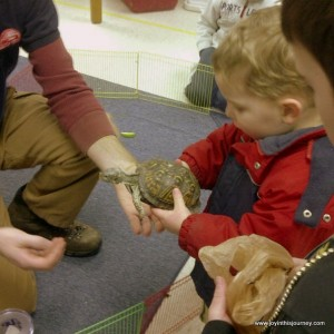 box turtle and boy