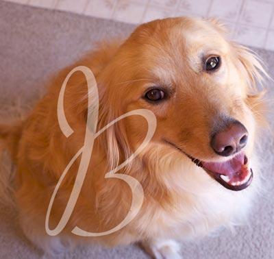 adoring dog