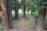 Delta park trees