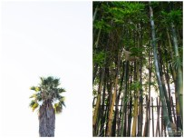 Palm tree and bamboo