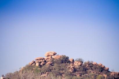 Boulders at Lonehill Nature Reserve