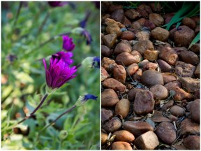 Purple flower and pebbles