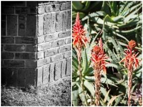 Orange aloe and brick wall