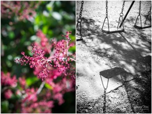 Pink flowers and swing shadows