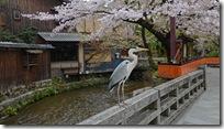 Konoplyova.Kyoto