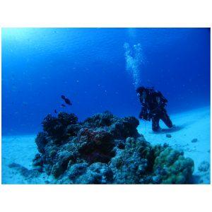 ダイビング スクール 水中写真撮影講習