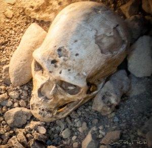 Détail de la sépulture : Le crâne de l