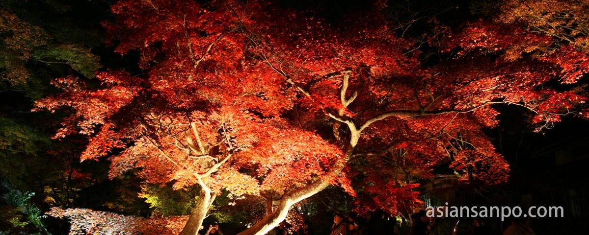 京都 宝厳院 紅葉