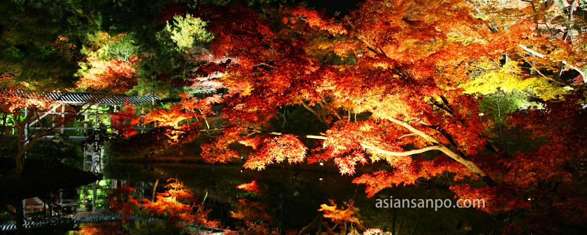 京都 高台寺 紅葉