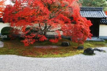 京都 等持院 紅葉