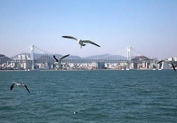 Korea Busan Gwangandaegyo Bridge AFotolia 129523944