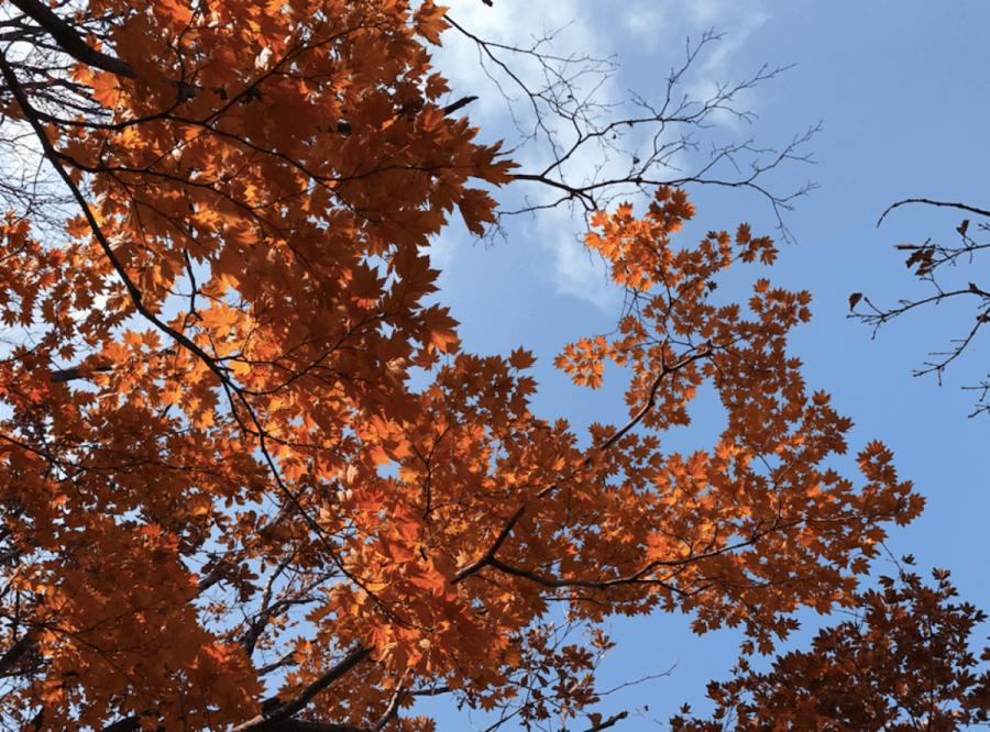 asia korea seoul autumn tour1