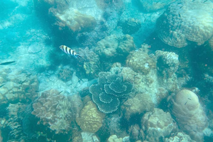 タイ・パタヤ出発シュノーケリング1日ツアー・サンゴ