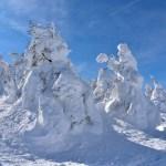 【宮城県刈田郡】樹氷原は東北にしかないレアな絶景!アイスモンスターを見に行こう!