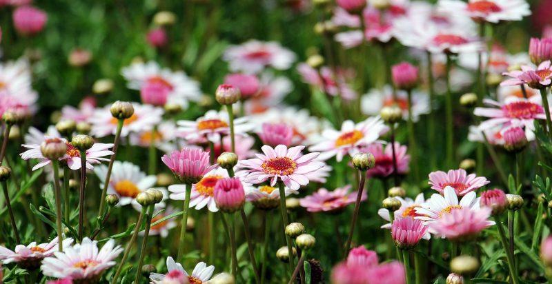 2018年度版67月は花の季節宮城の花イベントで季節を感じてみよう