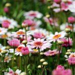 花咲く植物園