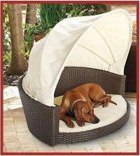 Outdoor Canopy Dog Bed, Pet Staycation, Interior Design ...