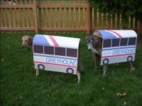 Greyhounds in Greyhound Bus Costumes! / halloween time ...