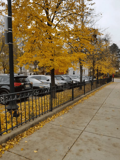 Fall-CleanUp-Curley