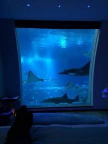 Beautiful Underwater Hotel Room