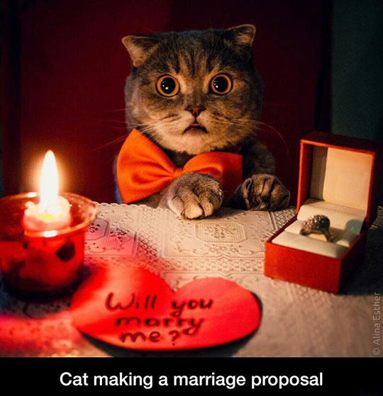 Cat Marriage Proposal JPEGY What The Internet Was