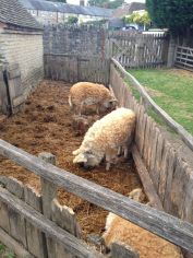 The property is a full farm with strange curly haired pigs, chickens, horses, gardens, etc.