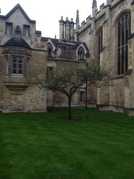 Trinity College: Where Isaac Newton studied and supposedly gained insight into the law of gravity under this apple tree.