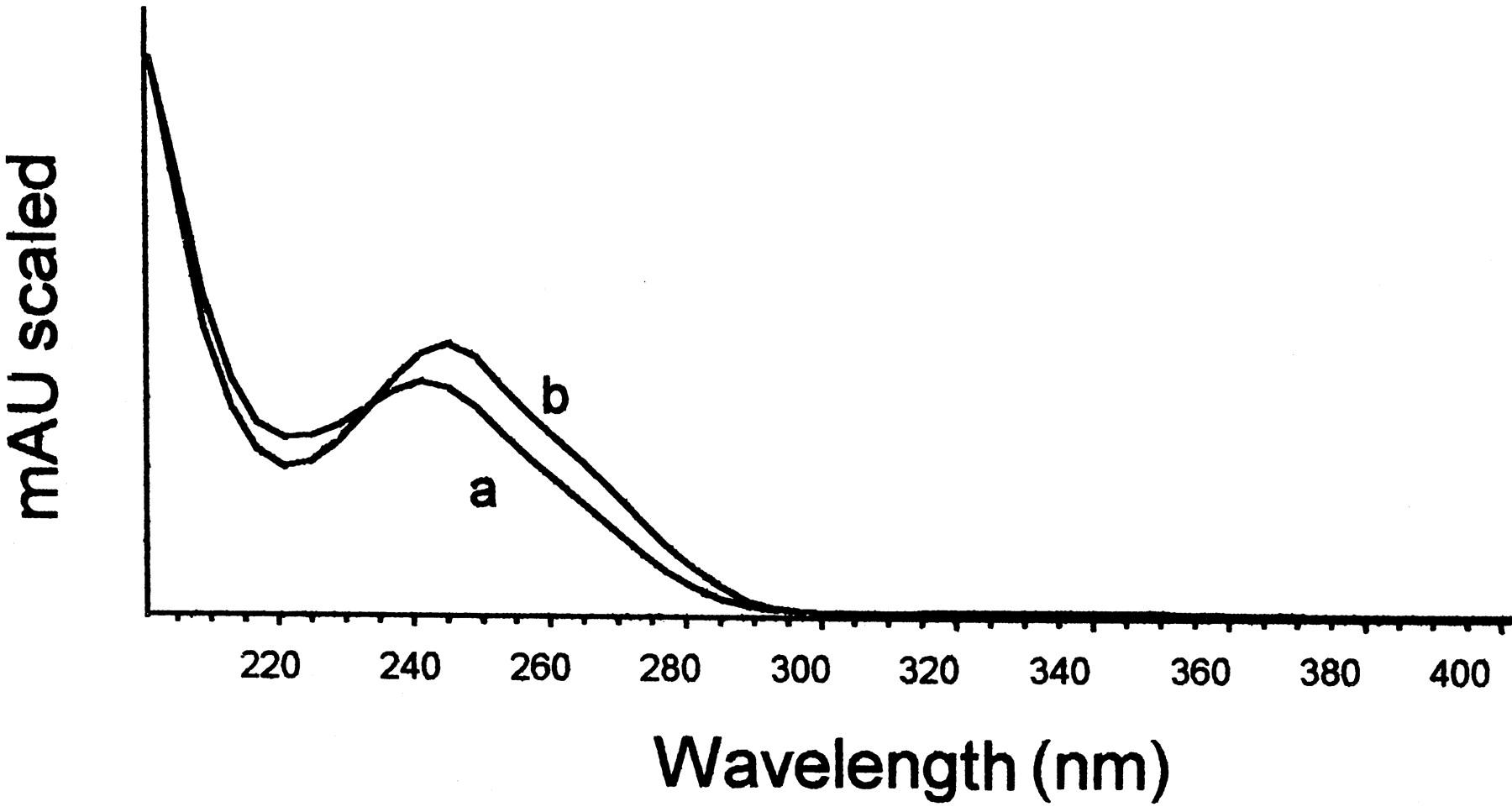 Reduction of Cisplatin Nephrotoxicity by Procainamide