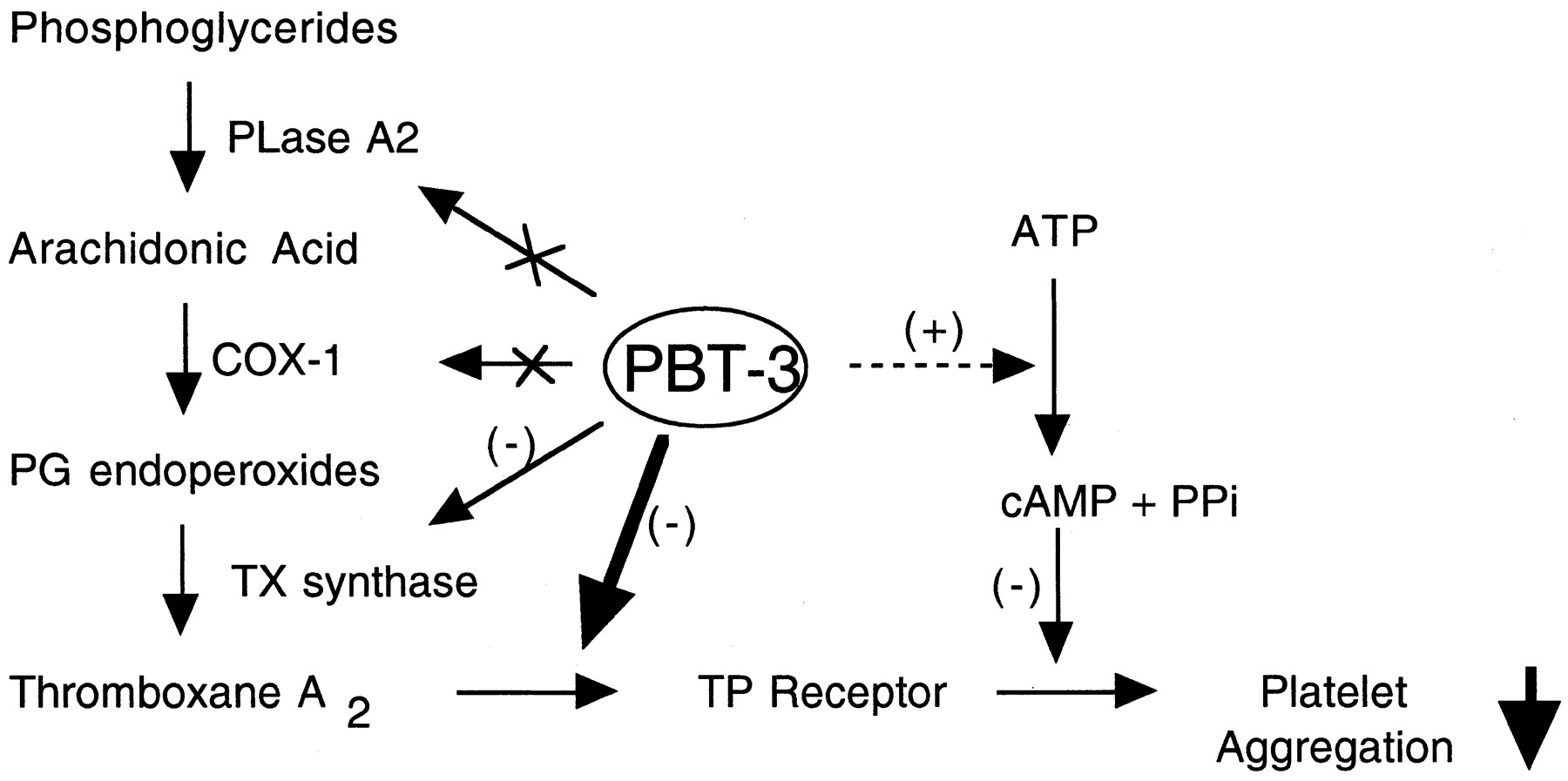 A New Family Of Thromboxane Receptor Antagonists With Secondary Thromboxane Synthase Inhibition